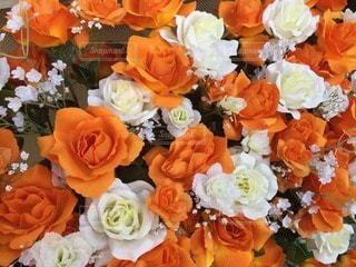 花の写真・画像素材[70084]