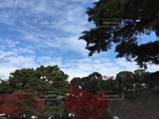 秋の写真・画像素材[73616]