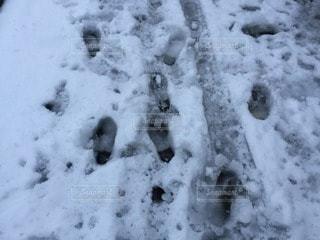 冬の写真・画像素材[73629]