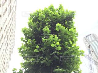 緑の写真・画像素材[169340]