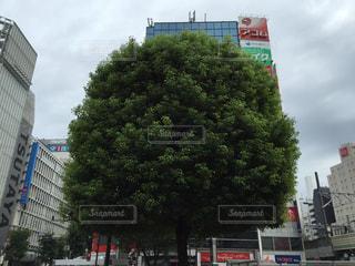 風景 - No.169349