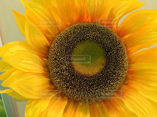 花の写真・画像素材[178321]