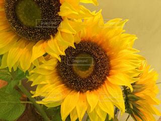 花の写真・画像素材[178322]