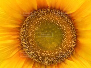 花の写真・画像素材[178325]