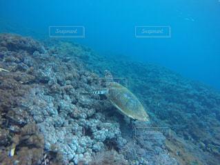 海の水中の亀の写真・画像素材[1369390]