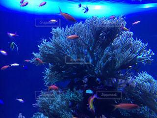 サンゴの水中ビューの写真・画像素材[1378493]