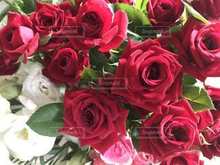 薔薇のアップの写真・画像素材[1382142]