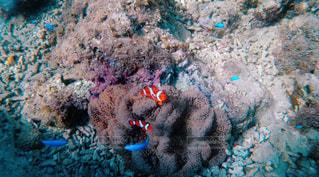 海の中の生き物の写真・画像素材[1370537]