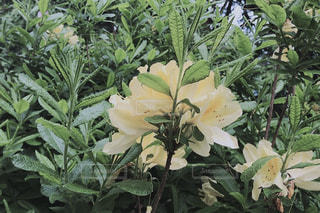 近くの植物のアップの写真・画像素材[1372091]