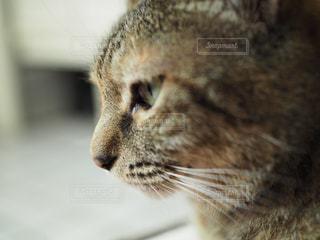 ネコの横顔の写真・画像素材[1382343]