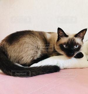 ベッドの上で横になっている猫の写真・画像素材[1403874]