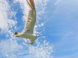 自由との戯れの写真・画像素材[1395771]