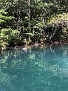 支笏湖の写真・画像素材[1459946]