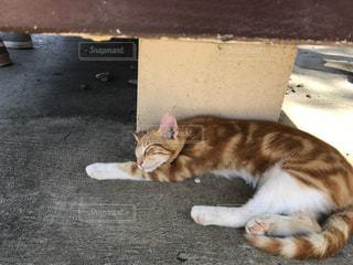 お昼寝中の猫 in ハワイの写真・画像素材[1381057]