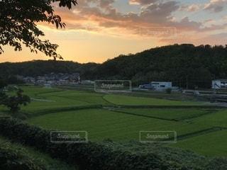 背景の木と大規模なグリーン フィールドの写真・画像素材[1375870]