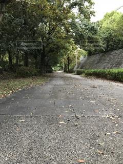 遊歩道の写真・画像素材[1456528]