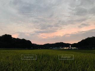 稲穂の海の夕暮れの写真・画像素材[1510564]