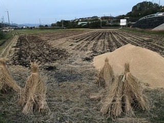 稲藁ともみ殻の山の写真・画像素材[1534675]