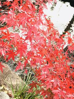 池に映える紅葉の写真・画像素材[1640414]