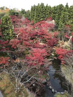観月橋からの紅葉の写真・画像素材[1640472]