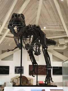 ティラノサウルスの骨格の写真・画像素材[1673499]