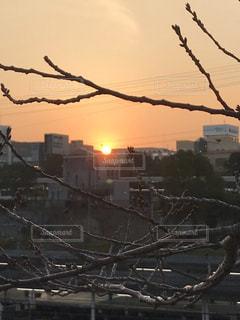 日没の上に座っている鳥の群れの写真・画像素材[1710647]