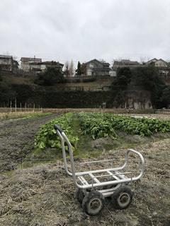 畑の中の手押し作業車と菜っ葉の写真・画像素材[1720187]