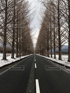 冬のメタセコイア並木の写真・画像素材[1758350]
