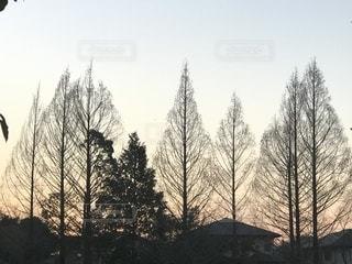夕映えに映える樹々のシルエットの写真・画像素材[1760334]