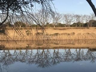 池の水かがみの写真・画像素材[1773316]