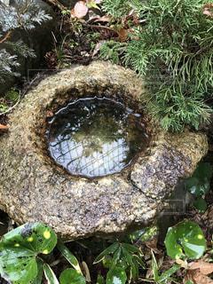 雨でしっとり手水鉢の写真・画像素材[1798962]