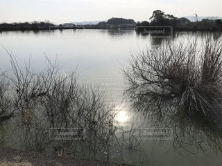 水上池の写真・画像素材[1827617]