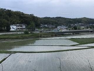 夕暮れの水田光景の写真・画像素材[2203107]