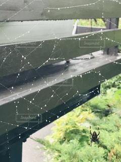 雨上がりの朝の蜘蛛の巣の写真・画像素材[2310114]