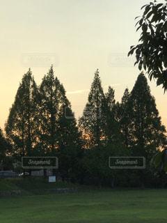 公園の木々の写真・画像素材[2324715]