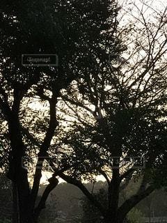 夕映えの木々のシルエットの写真・画像素材[2599379]