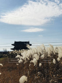 葦の穂と平城京跡朱雀門の写真・画像素材[2841619]