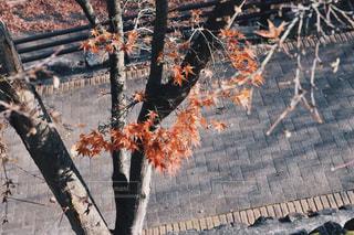 紅葉の写真・画像素材[1448842]