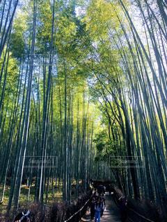 竹林の道の写真・画像素材[1450211]