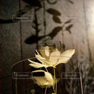 透明なガラスの花瓶に浮かぶ羽毛の花の写真・画像素材[1381071]