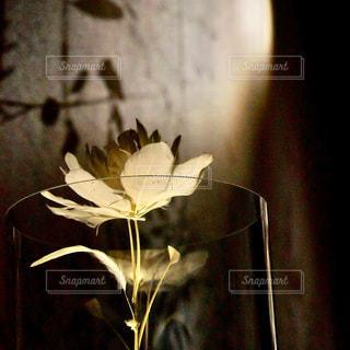 透明なガラスの花瓶に浮かぶ羽毛の花の写真・画像素材[1381073]