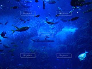 水の中の魚の群れの写真・画像素材[1376918]