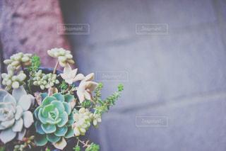 多肉植物の写真・画像素材[1379960]