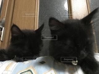 昼寝をする黒猫の兄弟の写真・画像素材[1393090]
