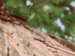 背伸び棒の写真・画像素材[1489943]