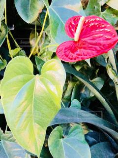 目にとまる植物の写真・画像素材[1377956]