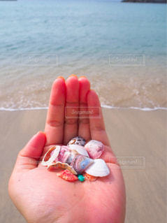 貝殻の写真・画像素材[1380881]