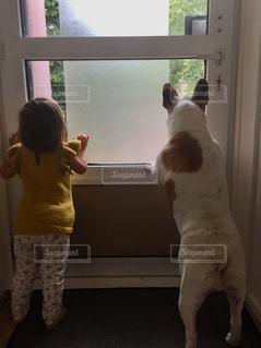 犬と子供の写真・画像素材[1386784]