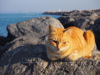 岩の上に座っている猫の写真・画像素材[1379233]