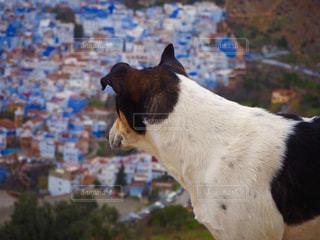 シャウエンの犬の写真・画像素材[1379234]